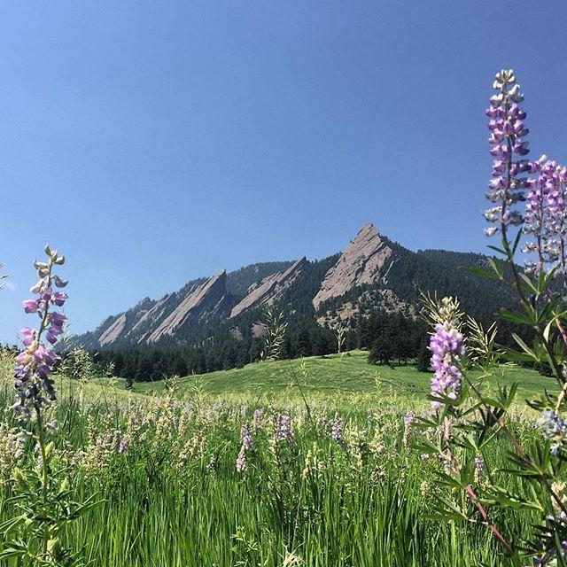 Flatirons in the summer. So beautiful! #flatirons #summer #wildflowers #blueskies #boulder #coloradoliving #nofilter