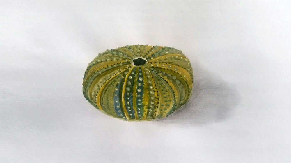 This is last week's effort. It's a sea-urchin shell - or Kina. I was so happy with how this one turned out - it's not Van-Gogh, but I'm proud of it! :-)