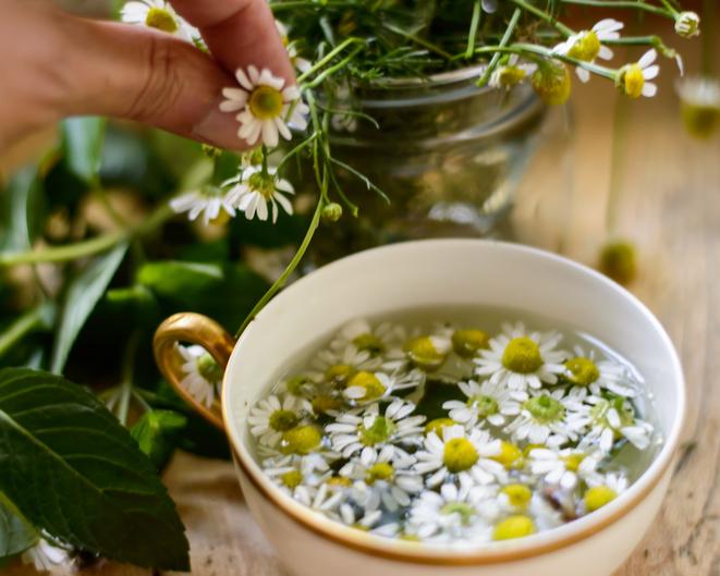 Herbal Remedies NJ | Herbal Wellness New Jersey