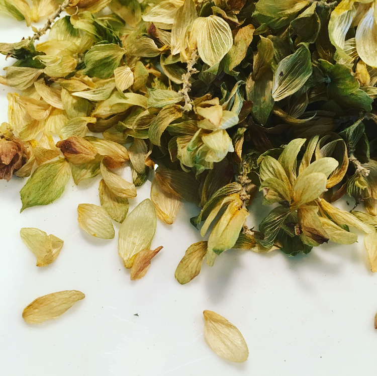 Hops have a bitter, floral flavor that is quite lovely.
