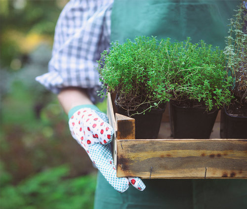 Herbal Gardening Classes Central New Jersey | Herbal Wellness