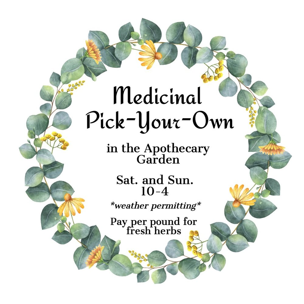 Medicinal Pick-Your-Own Herbs in the Apothecary Garden.jpg