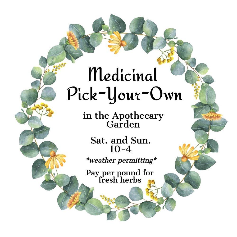 Medicinal Pick-Your-Own Herbs in the Apothecary Garden.jpg