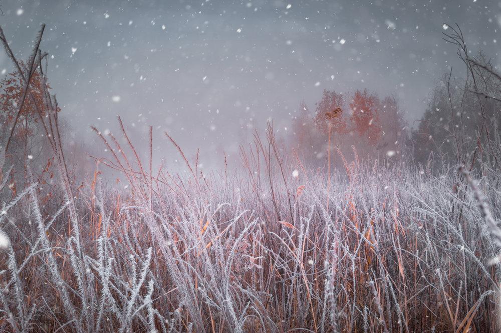 Solstice Season Frosty Grass