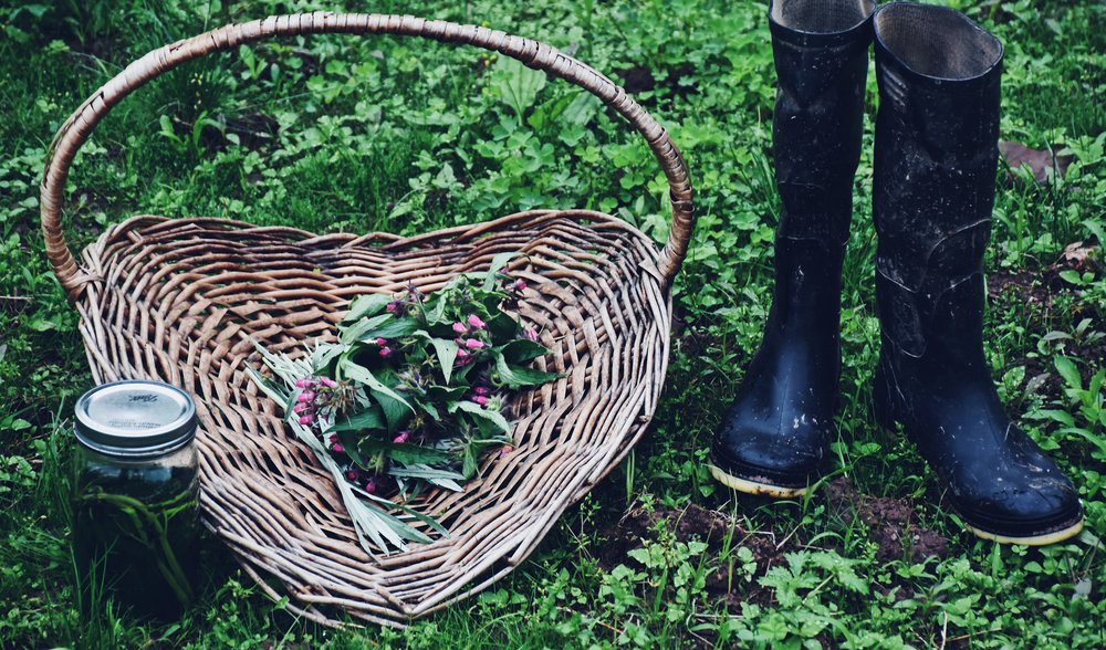 herbalism classes on the farm central NJ