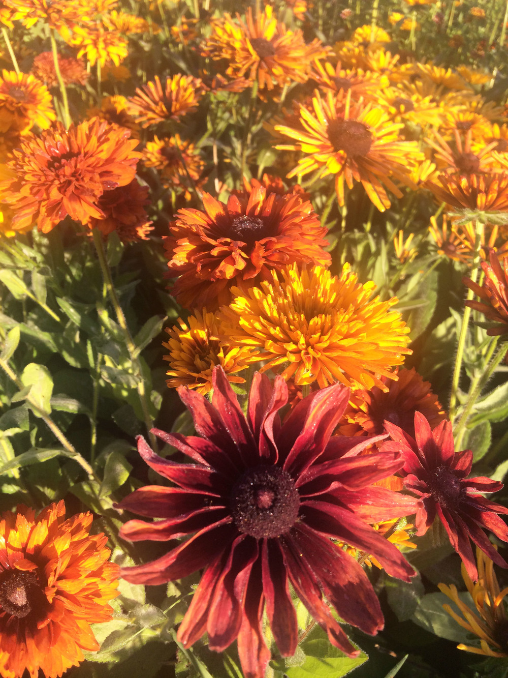 indiana grown flowers — Sweet Peas Flower Farm