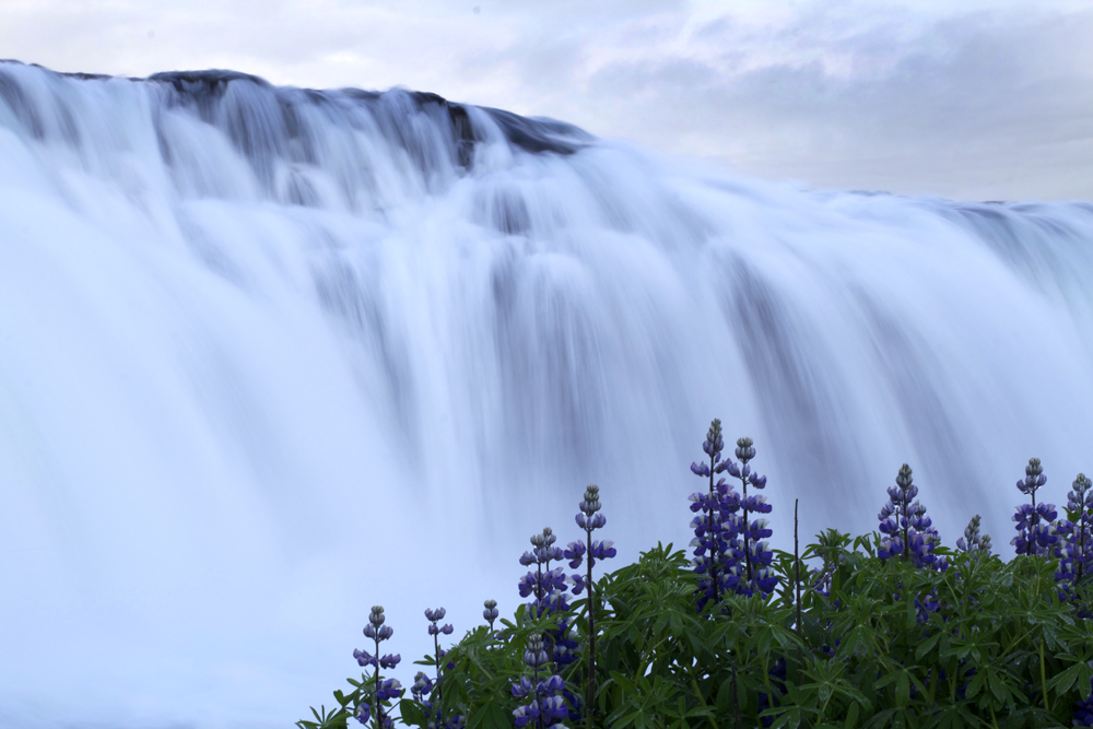 Waterfall-Flowers.jpg