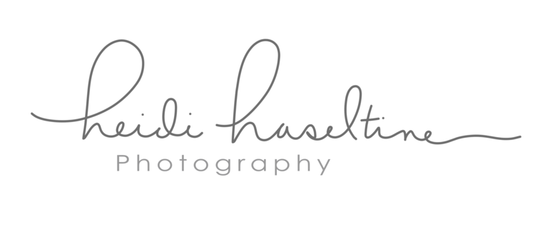 Heidi Haseltine Photography