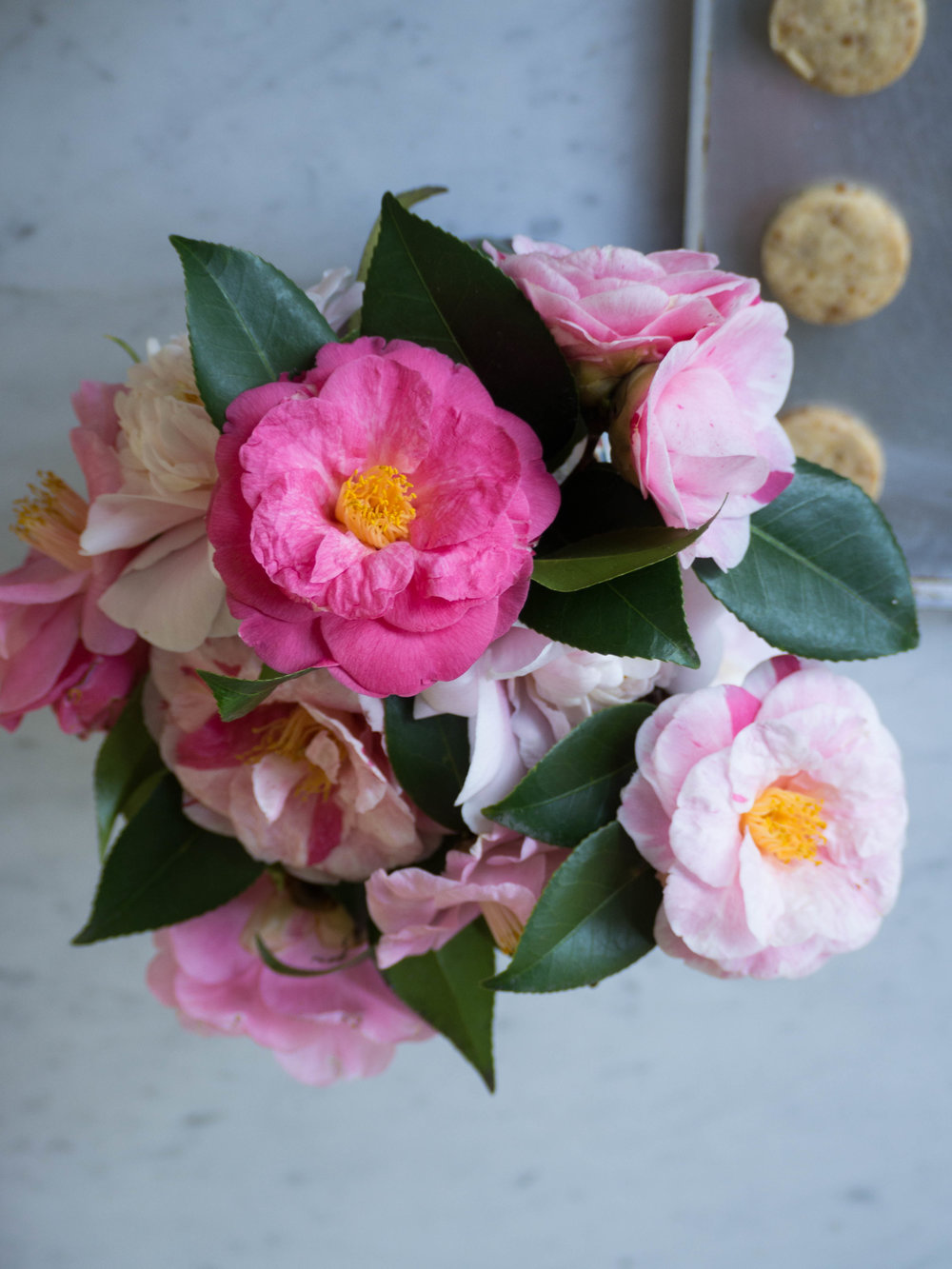 Homegrown Camellias