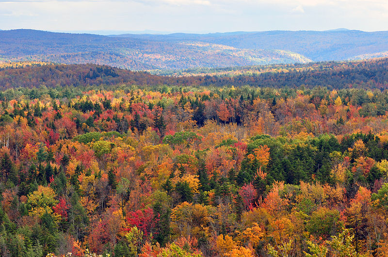 800px-Vermont_fall_foliage_hogback_mountain.jpg