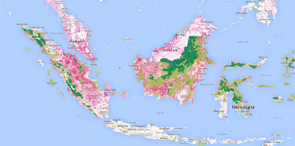 Pink shows forest loss between 2000 and 2013, dark green showsintact forest, light green shows degraded lands, yellow islogged forest and light pink is palm plantations.source: globalforestwatch.org