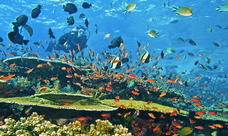 floresxp.com/diving