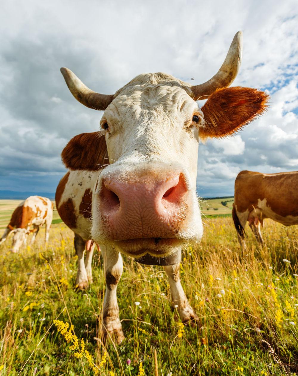 buy-grass-fed-organic-beef