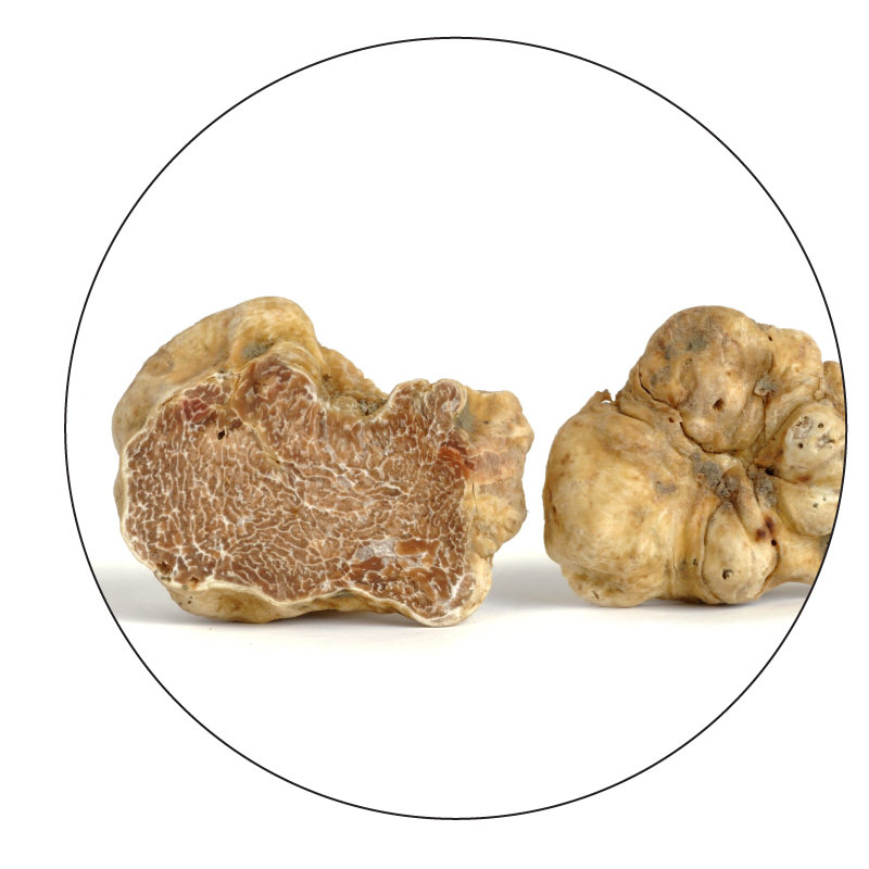 made of premium white alba truffles