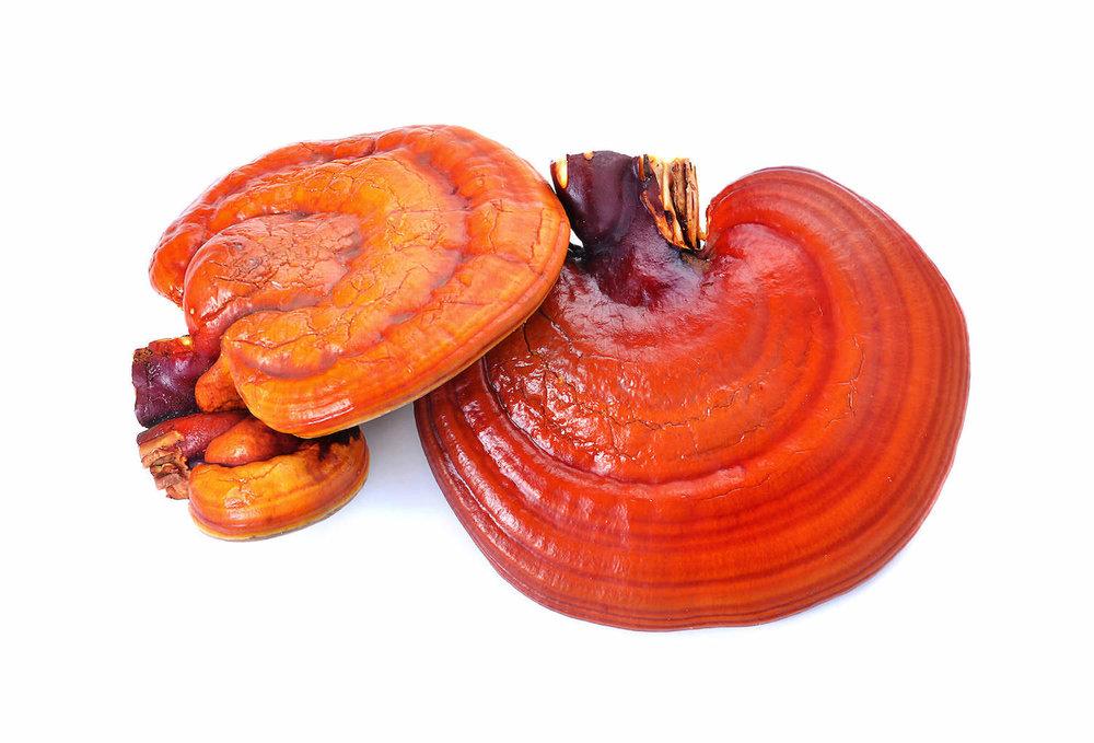 organic-reishi-mushroom-extract-powder.jpg