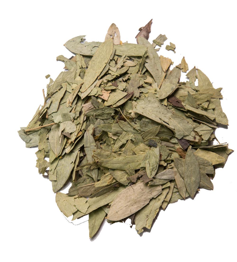 senna-leaf.jpg