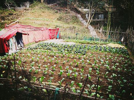 obrien_communal_farm.jpg