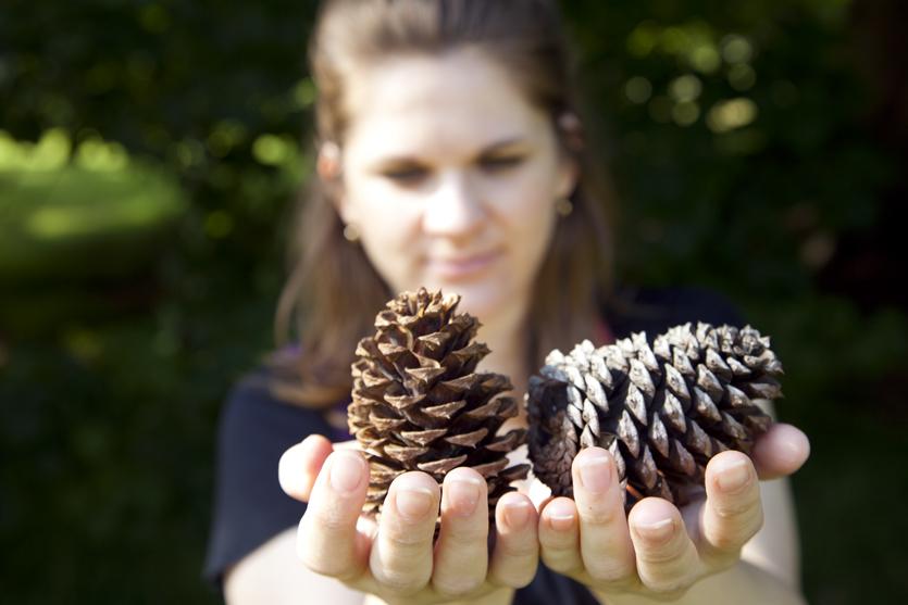 cone seeds.jpg