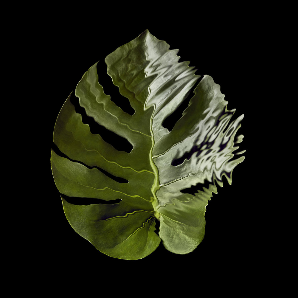 tropical-rainforest-leaves-rippled-distorted-still-life-photographer-london-paris-new-york-1-cheese-leaf.jpg