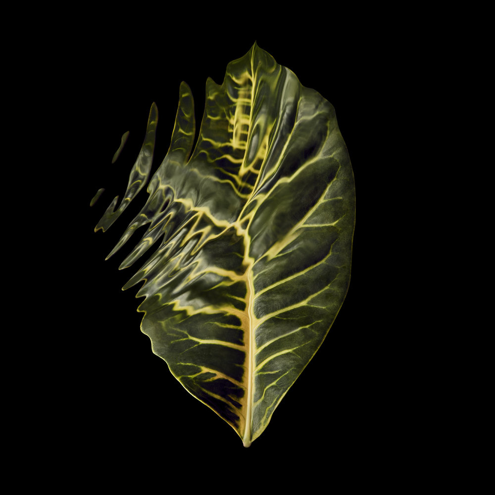 tropical-rainforest-leaves-rippled-distorted-still-life-photographer-london-paris-new-york-2.jpg