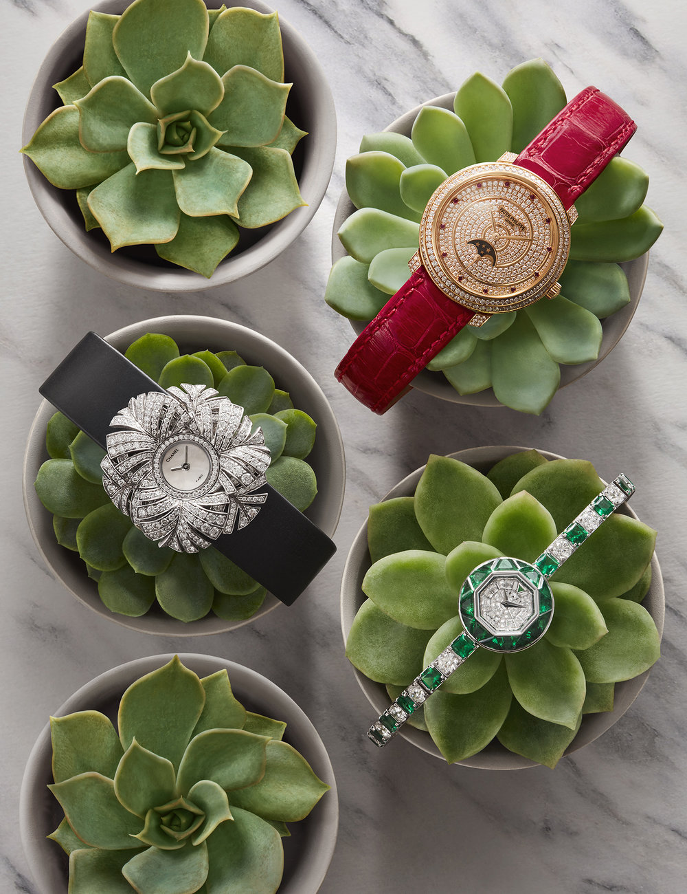 watch-photographer-london-luxury-watches-still-life-product-photography-cacti-succulents-plants-product-photographer-1.jpg