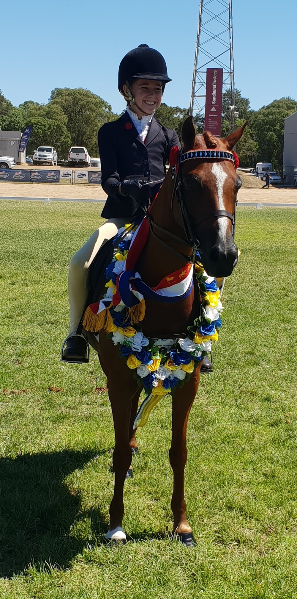 Open Small Saddle Pony.jpg