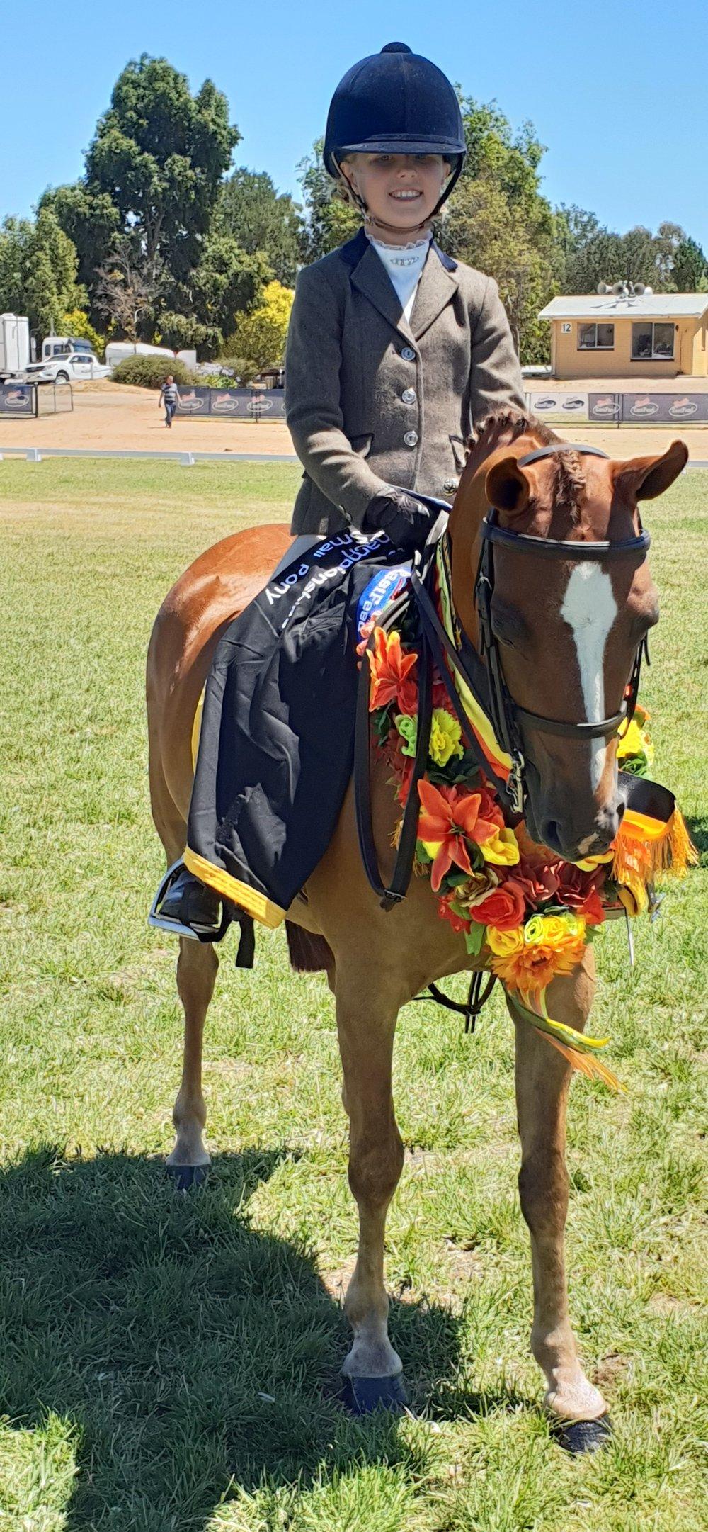 Small Show Hunter Pony.jpg