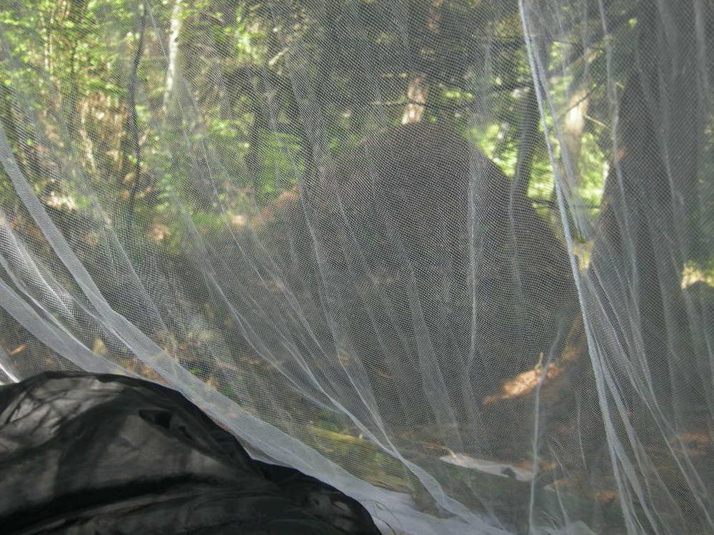 .... vid detta tillfälle upptäckte jag något jag inte sett på natten när jag hängde upp myggnätet... Hela marken full av myror. På Gotland var det nästan samma sak vid ett tillfälle, men större levande varelser runt tältet... Kor! Hade missat att jag åkte över en färist... Jag klev ut ur tältet med uniform och allt... mitt i en hage.... snabbt därifrån... måste ha sett ganska lustigt ut...