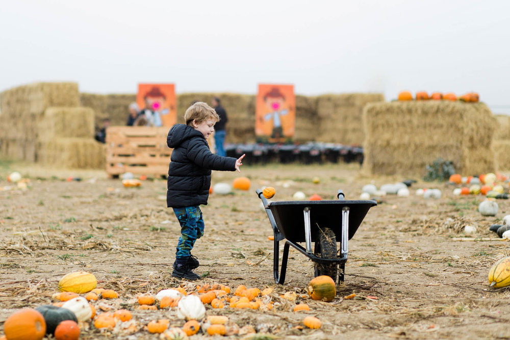 little boy with wheel barrow at pumpkin patch