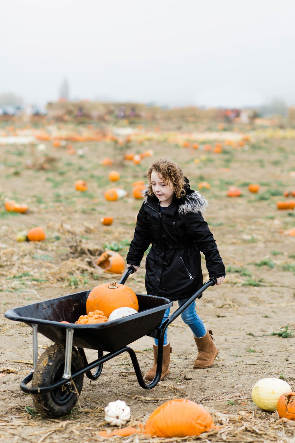 little girl with pumpkins in wheelbarrow