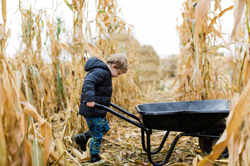 boy pushing wheelbarrow through cornfield