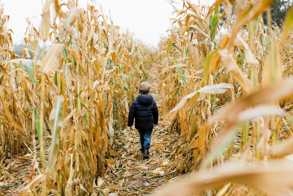 boy walking through cornfield