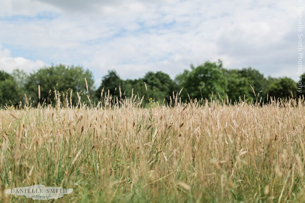 long grass in field at mangapp manor