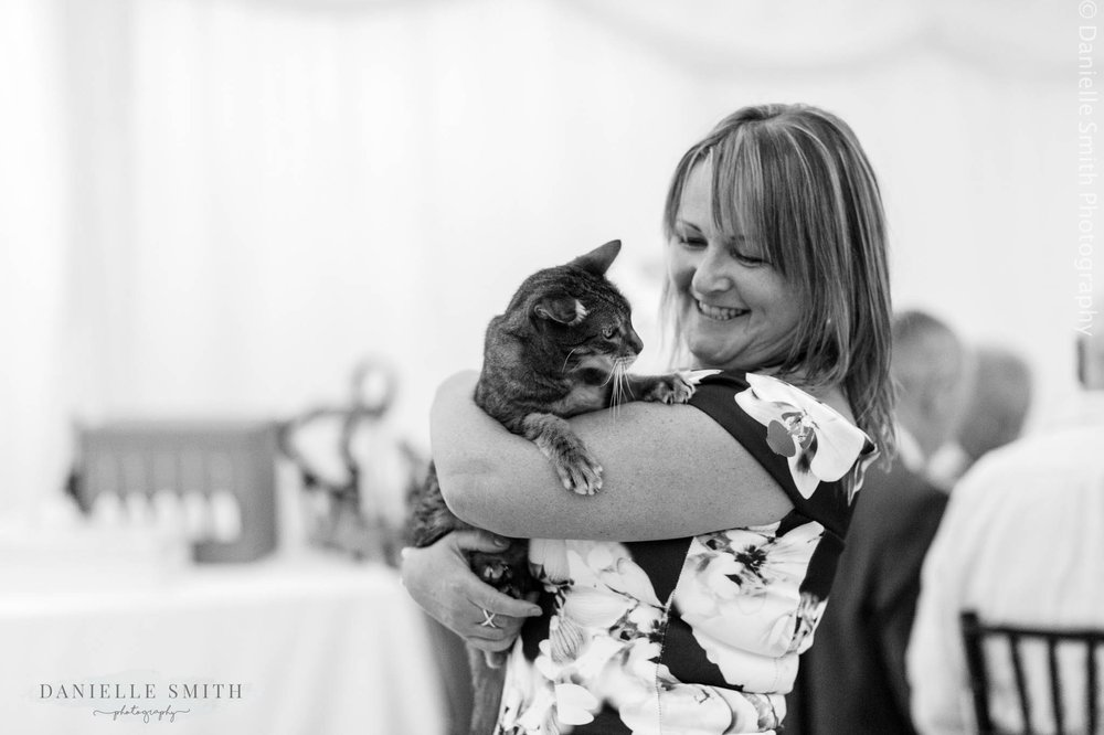wedding guests holding cat