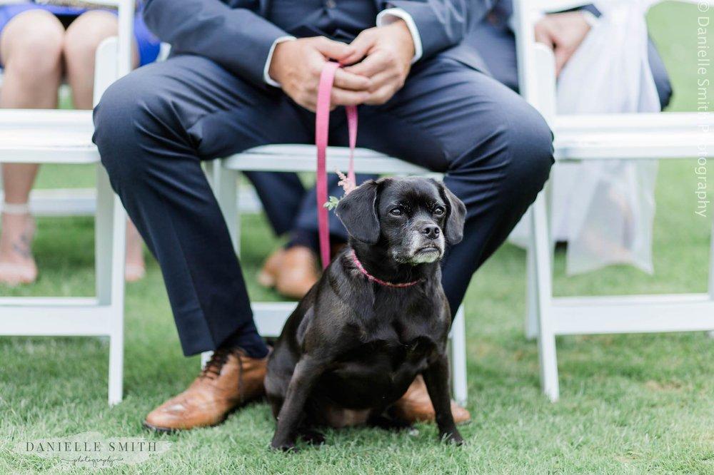 dog during wedding ceremony- intimate garden wedding