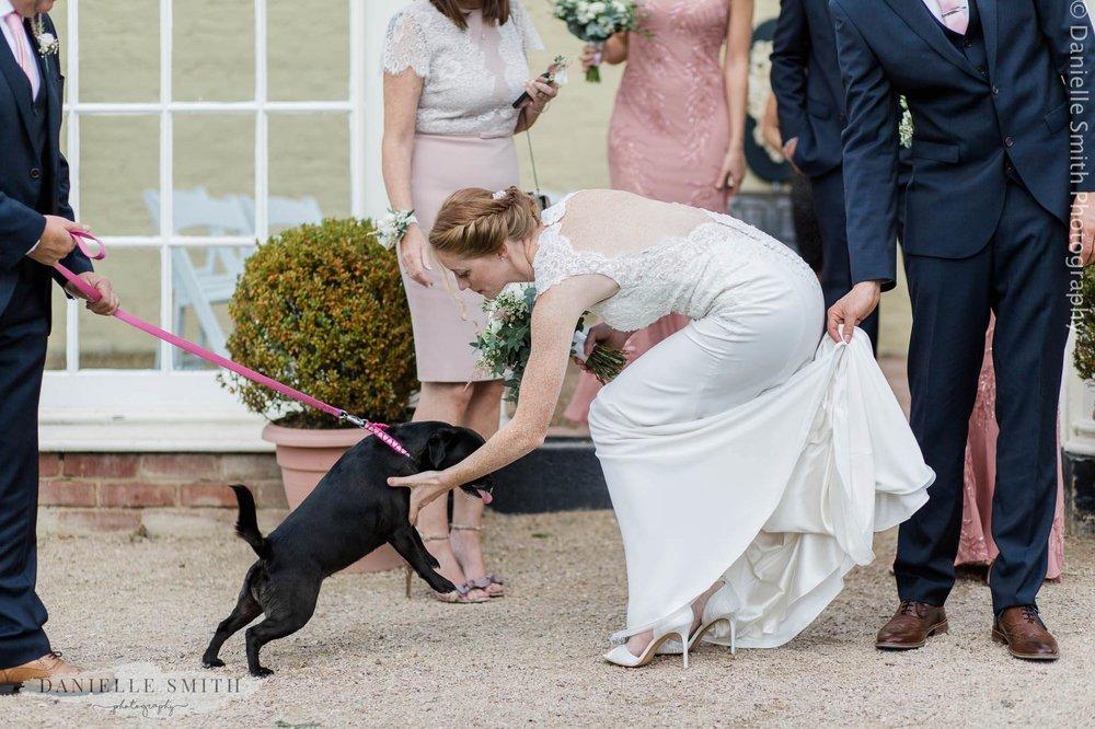 bride seeing her pet dog at wedding