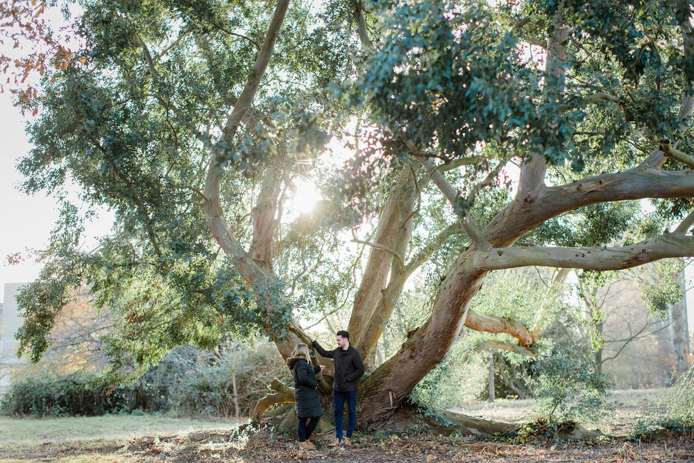 couple in autumn pre-wedding shoot with huge tree