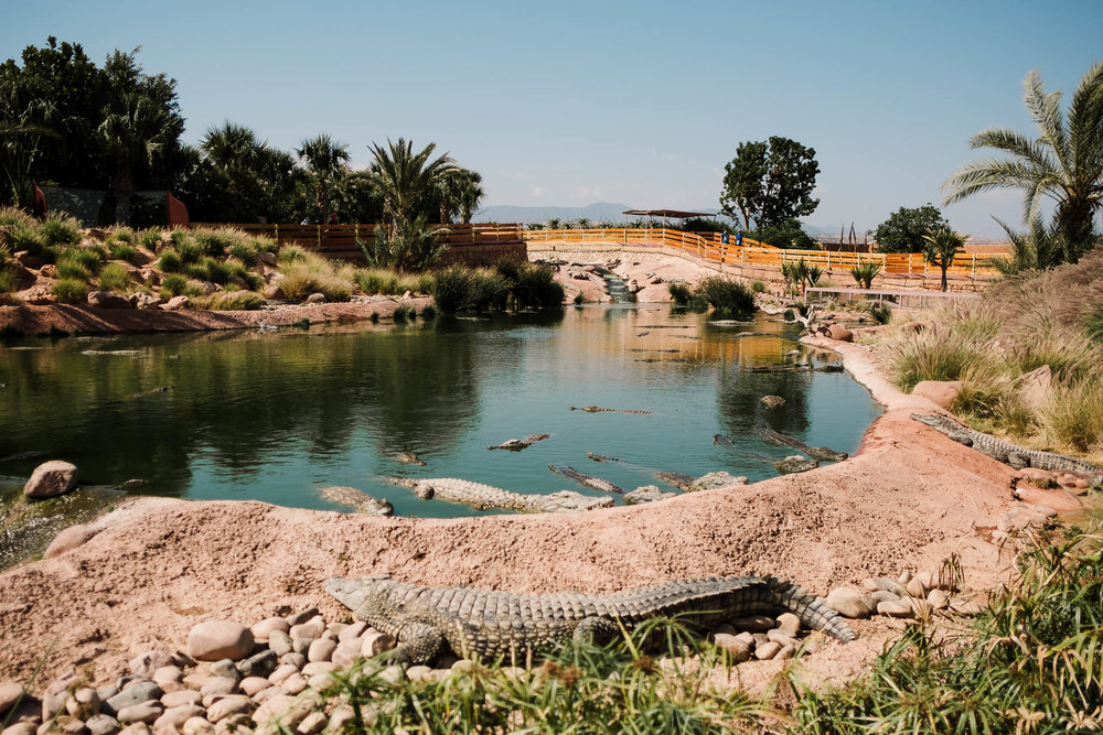 crocodile park agadir