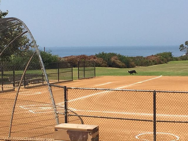 A little slice of #baseball #heaven in SoCal! #pacificocean