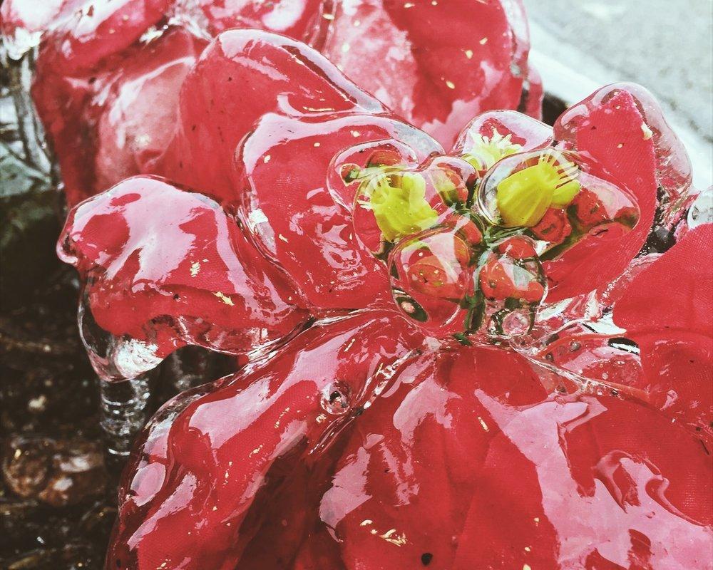 frozen flower.jpg