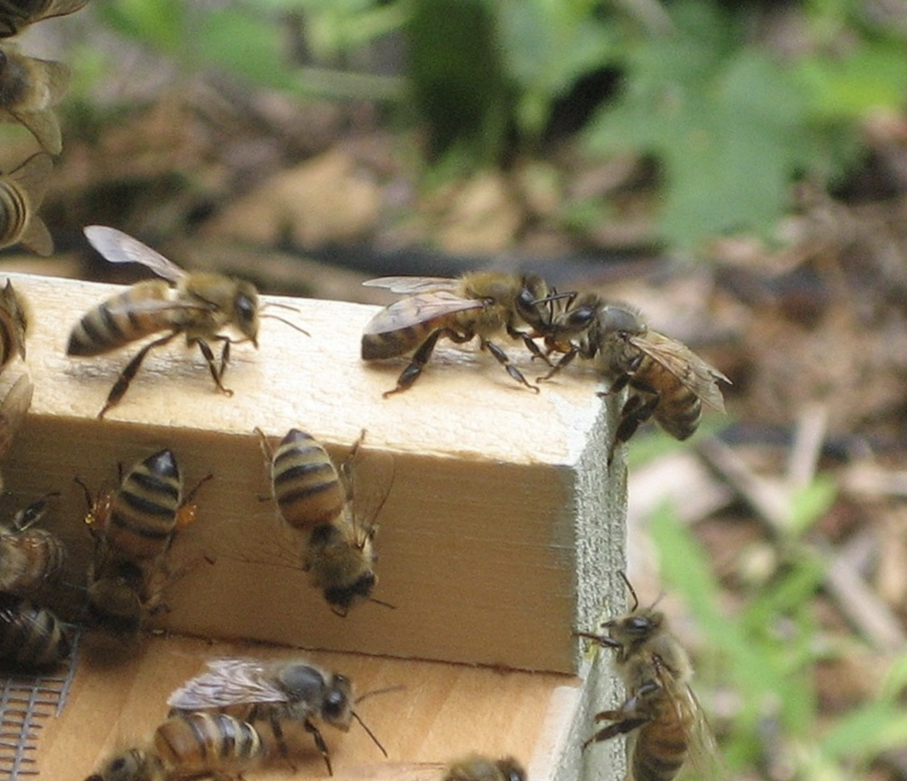 Beacon Bee