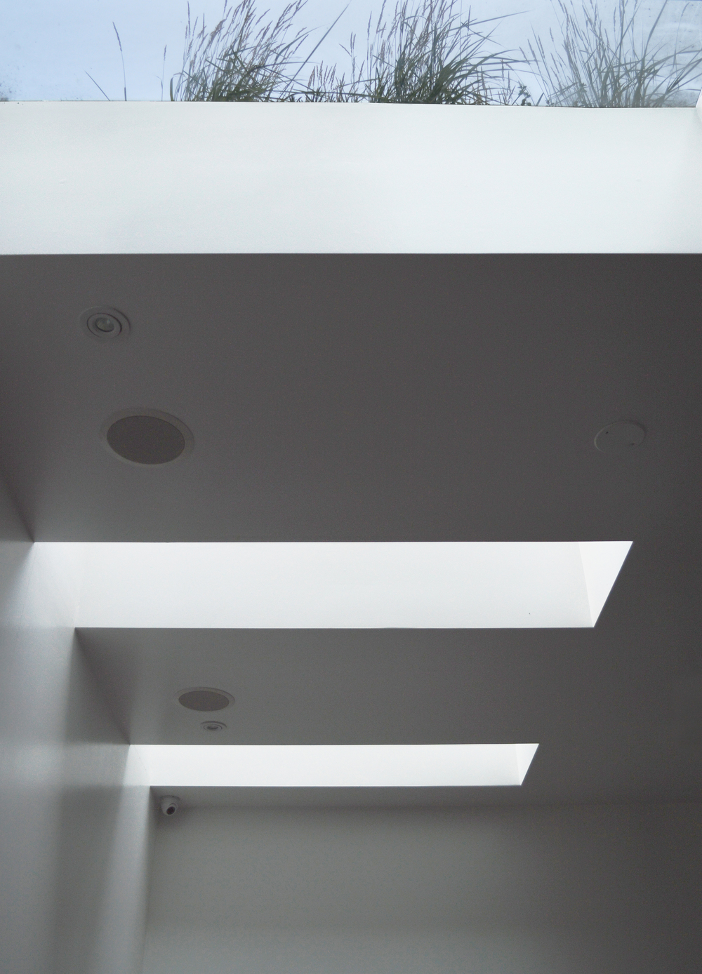 skylight and grass 1.jpg