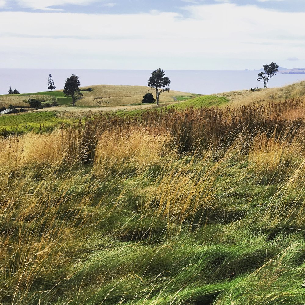 LET ME SHOW   YOU AROUND... - KAURI CLIFFS AND THE BAY OF ISLANDS