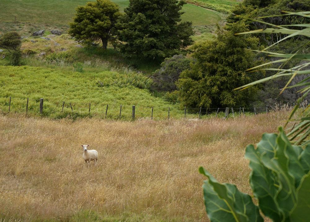 Daytripper365 Kauri Cliffs (32 of 33).jpg