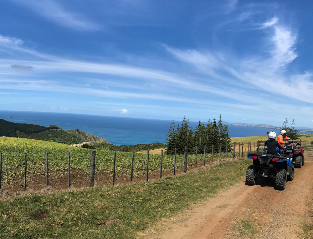the best way to explore the 6,000 acres is by quad bike, with a stop at the property's hidden waterfall and 700 year old kauri tree. you can also go 4-wheeling on the magnificent Ninety Mile beach. (reached via a very long drive or helicopter) the hotel can arrange other activities such as horseback riding, sand dune surfing, fishing, and helicopter rides. history buffs can visit the waitangi treaty house to learn more about maori culture.