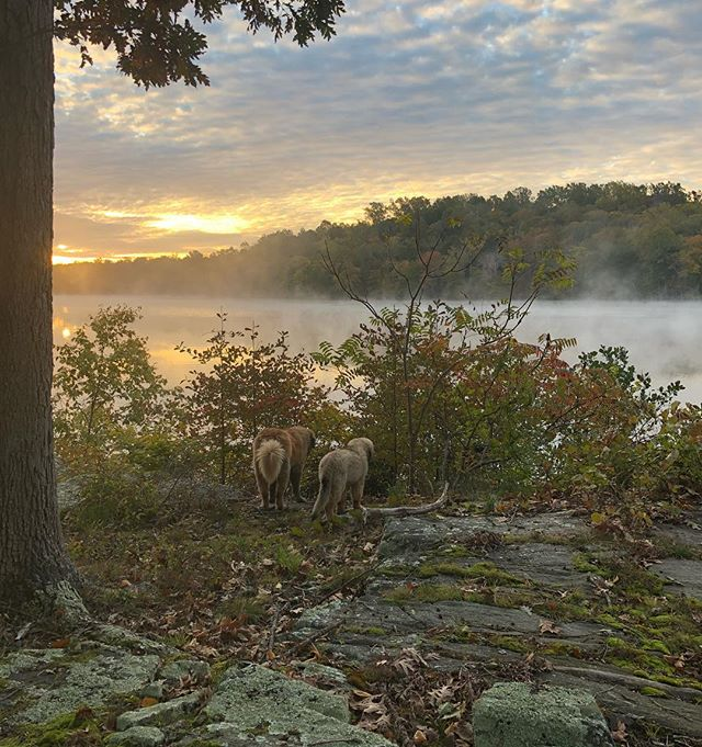 It's starting to look-and feel- like fall in NY. Ahh, mornings like these! #fallfoliage #morningmist #lakelife . . . . . . . #morningslikethese #morninglight #lakestyle #lakeside #travelguide #chasinglight #pursuepretty #flashesofdelight #autumnleaves #leonberger #leonbergersofinstagram #leonbergerpuppy #mistymorning #autumnsunrise