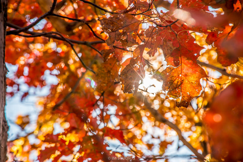 Fall Photos 2015 (54 of 70).jpg