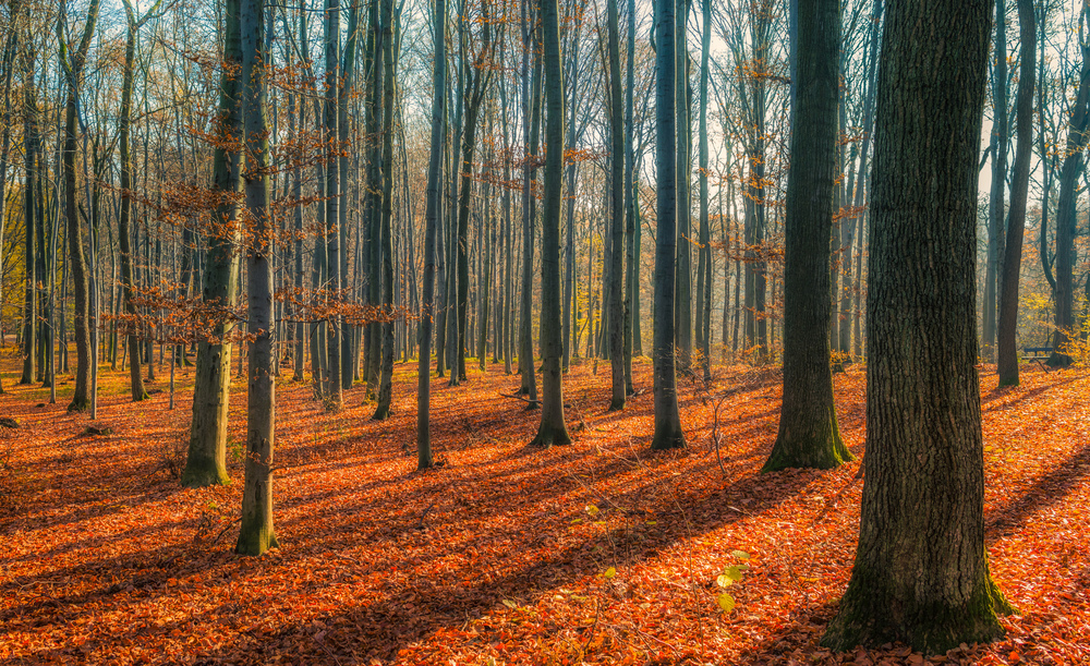 Bielańsko-Tyniecki Park Krajobrazowy
