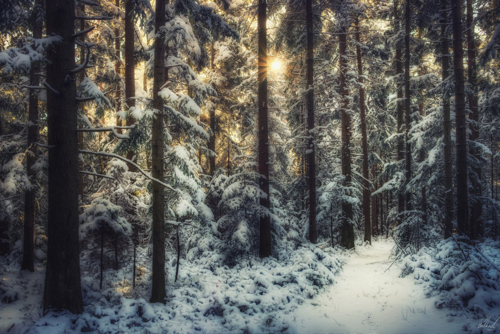 Okoliczny mroźny las, zdjęcie trafi do galerii