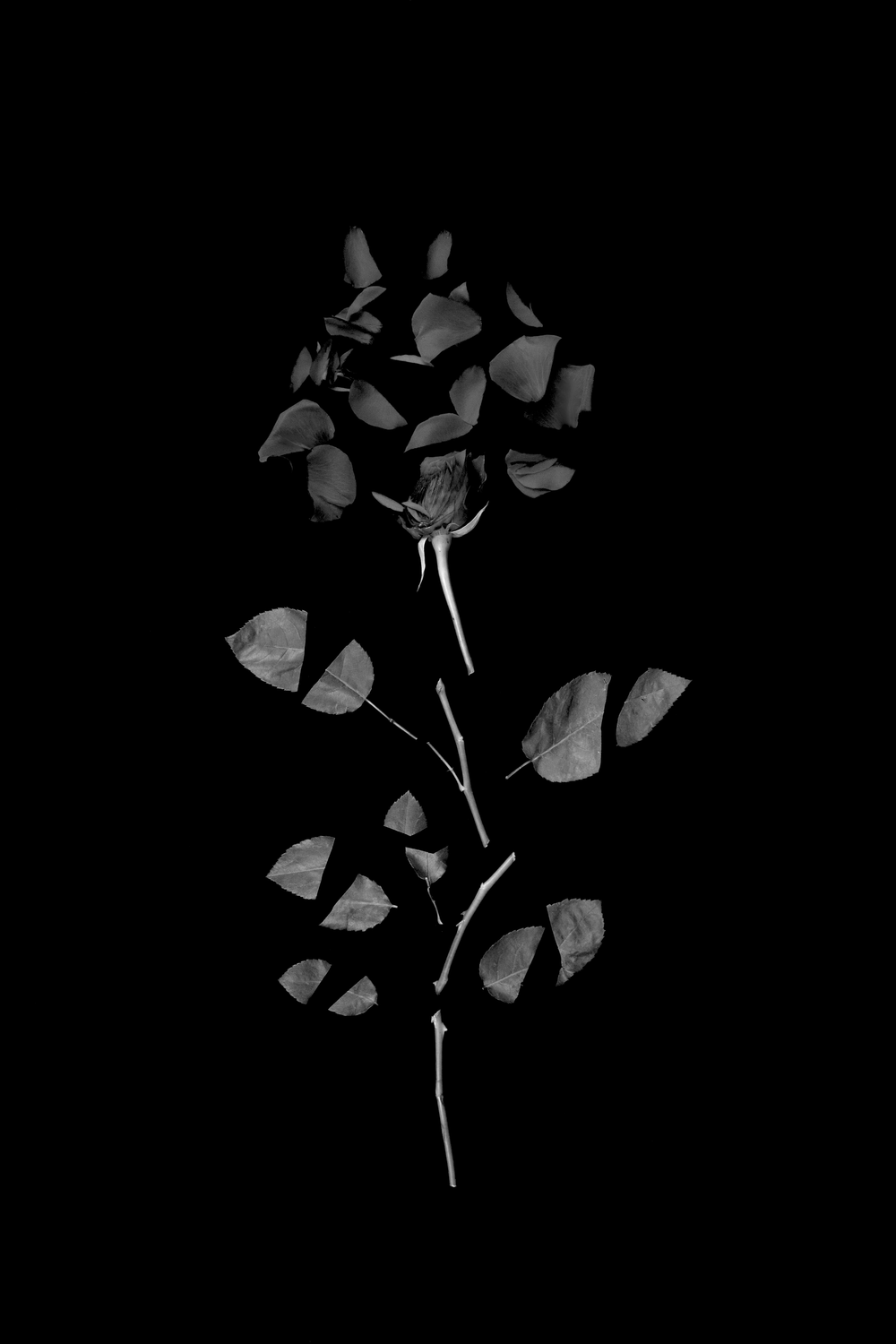 FLOWER_BLACK.png